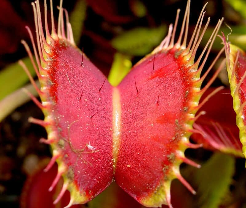 The Venus Fly Trap of the Small Business Owner